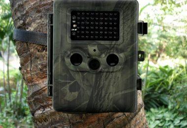photo d'une caméra de chasse postée sur un arbre